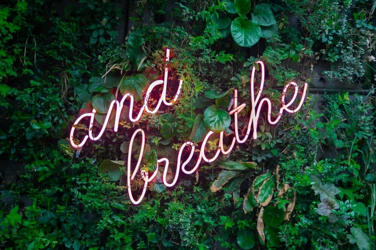 """Green foliage with the a neon pink sign over it that says """"and breathe"""". A tip to slow down talking."""